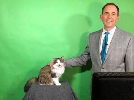 アメリカで猫の気象予報士「ベティちゃん」が誕生!飼い主さんのテレワークで思わぬテレビ出演