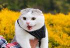 ネコの決定的瞬間を捉えた写真が大集合!写真展「ねこにすと」のWEB版が第2弾をスタート