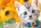 アメショやスコティッシュフォールドも♪図鑑LIVEの最新刊は「もふもふ動物の赤ちゃん」