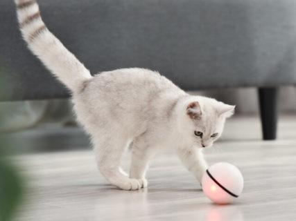 お値段ニャンと2,480円!猫と遊んでくれる「スマートペットボール」ドンキ系列のお店で発売 | Cat Press