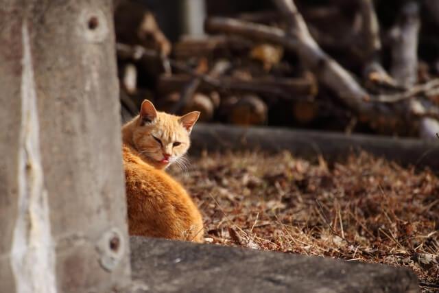 振り返る外猫のイメージ写真