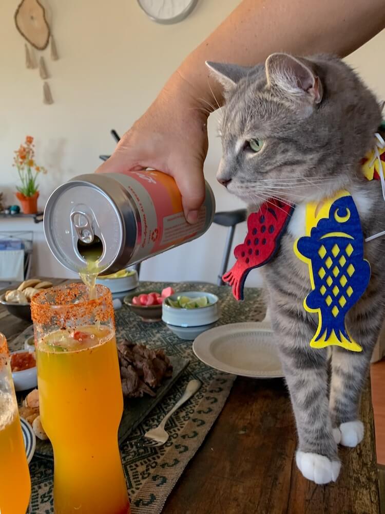 猫の前でお酒を注ぐイメージ写真