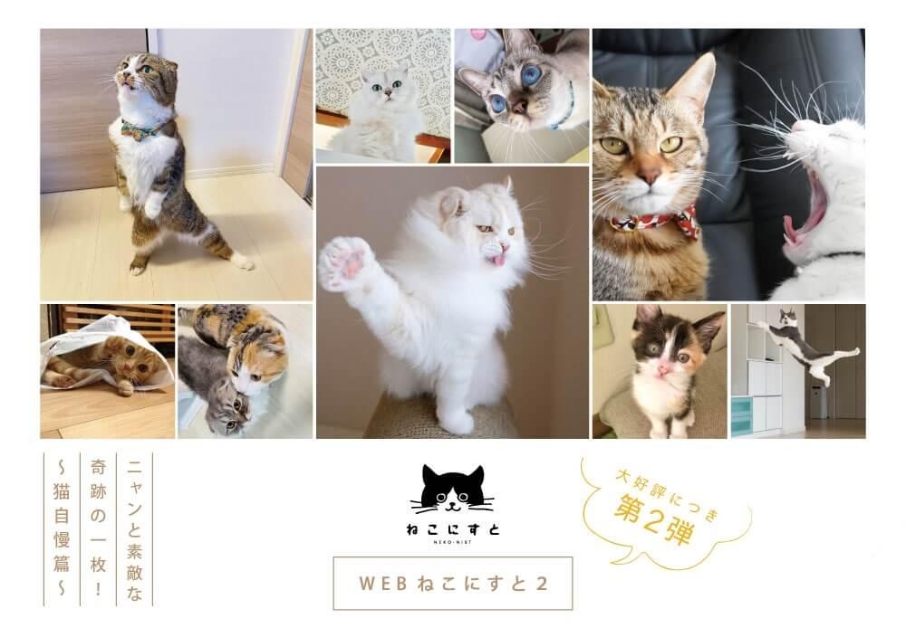 猫の写真展「WEBねこにすと〜ニャンと素敵な奇跡の一枚!〜」メインビジュアル