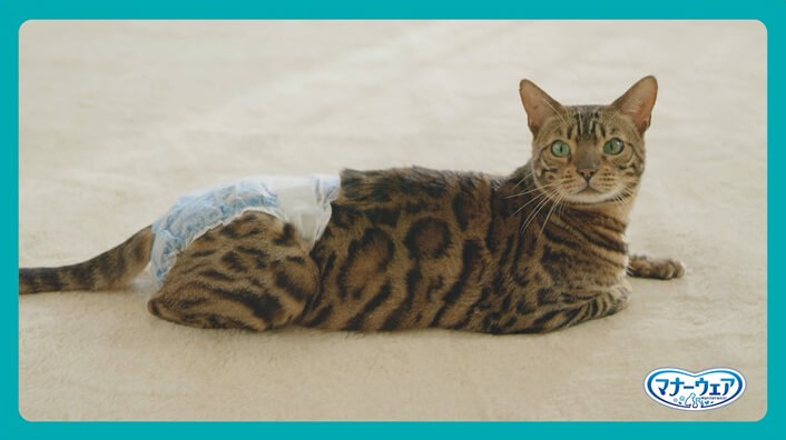 猫用おむつ「マナーウェアねこ用」の履かせ方を紹介する動画イメージ
