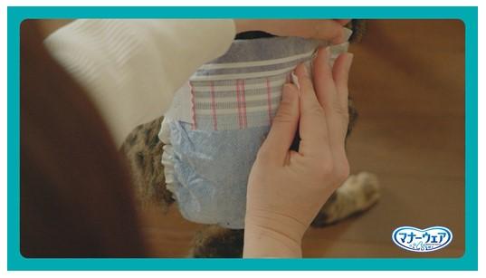 猫のおむつをテープで止める様子 by マナーウェアねこ用