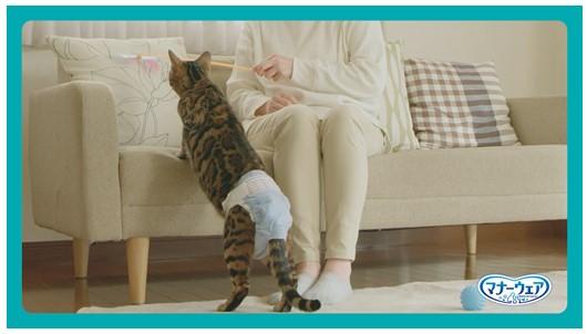 遊んで猫におむつから気をそらさせる by マナーウェアねこ用