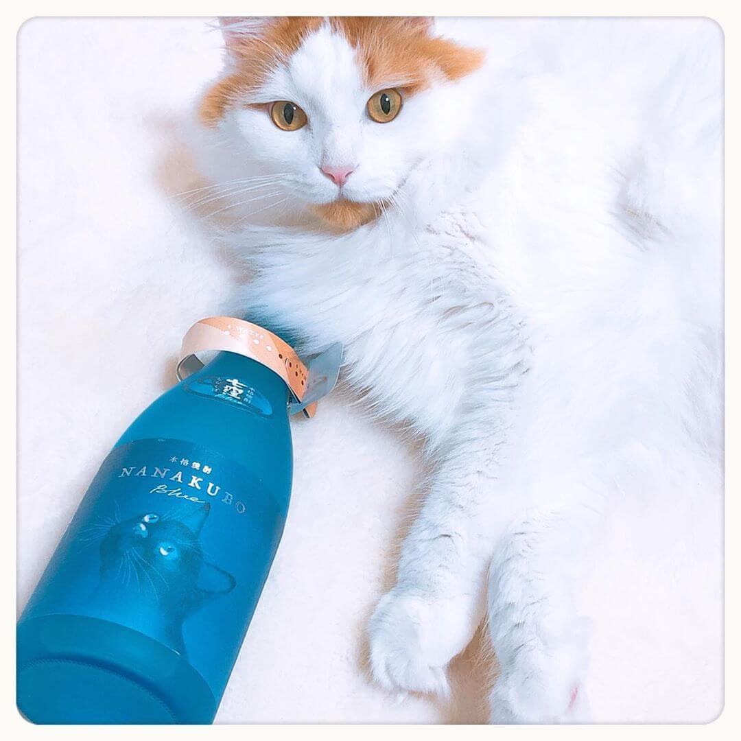 芋焼酎の酒瓶ボトルと美しい白猫の写真 by NANAKUBO BLUE