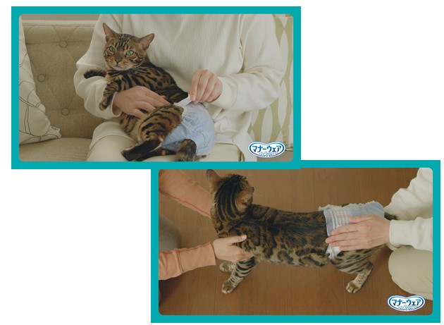 抱っこしたり2人掛かりで猫におむつを履かせる様子 by マナーウェアねこ用