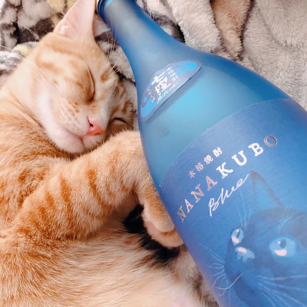芋焼酎の酒瓶ボトルの横で眠る茶トラ猫の写真 by NANAKUBO BLUE