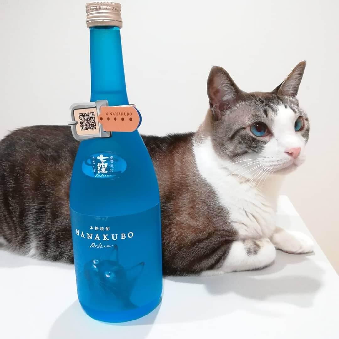 芋焼酎の酒瓶ボトルとブルーの目をしたキジ白猫の写真 by NANAKUBO BLUE