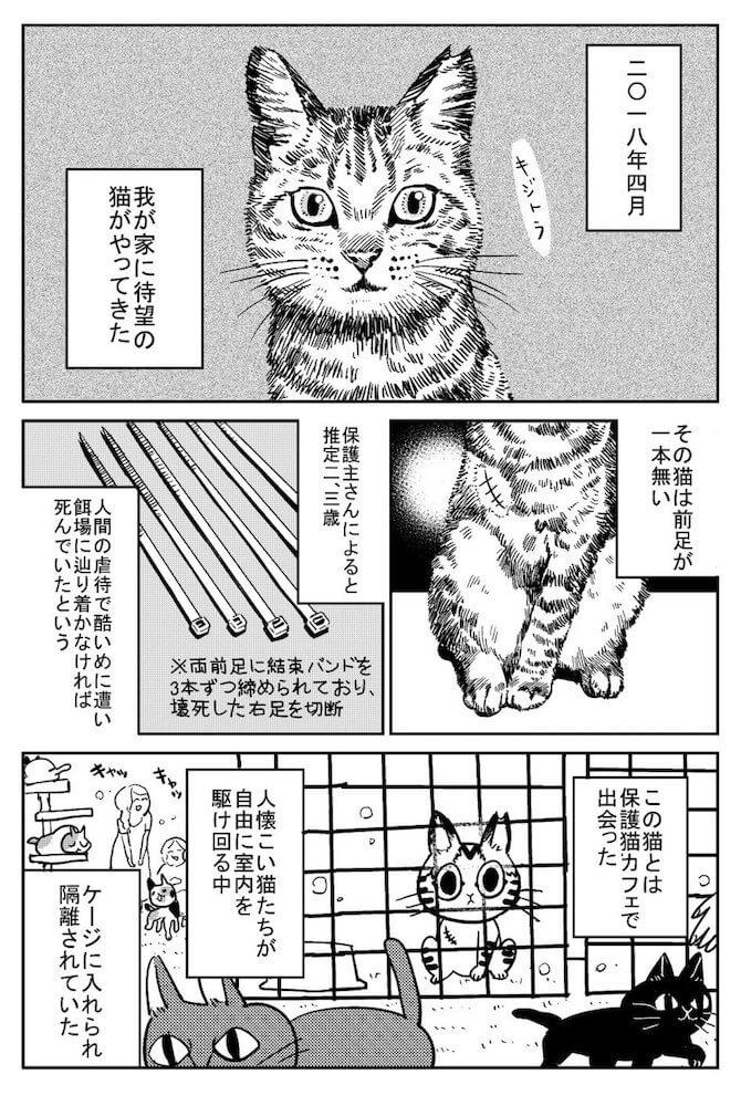 保護猫カフェで出会った天道グミさんとキジトラ猫のしじみちゃんby 3本足のしじみちゃん