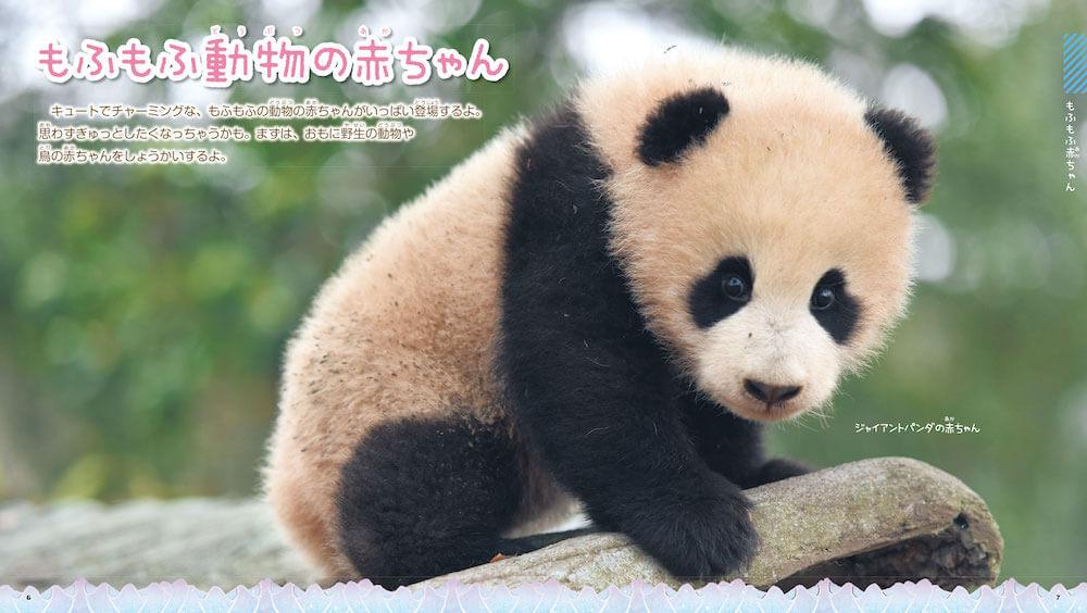 ジャイアントパンダの赤ちゃん by 図鑑「もふもふ動物の赤ちゃん」