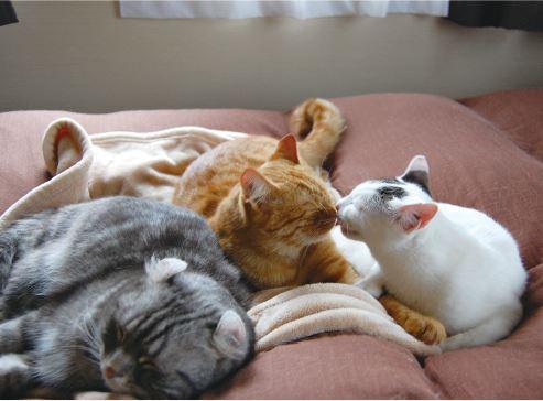 フォトエッセイ『3匹のネコとの思い出』に登場する3匹の猫の写真