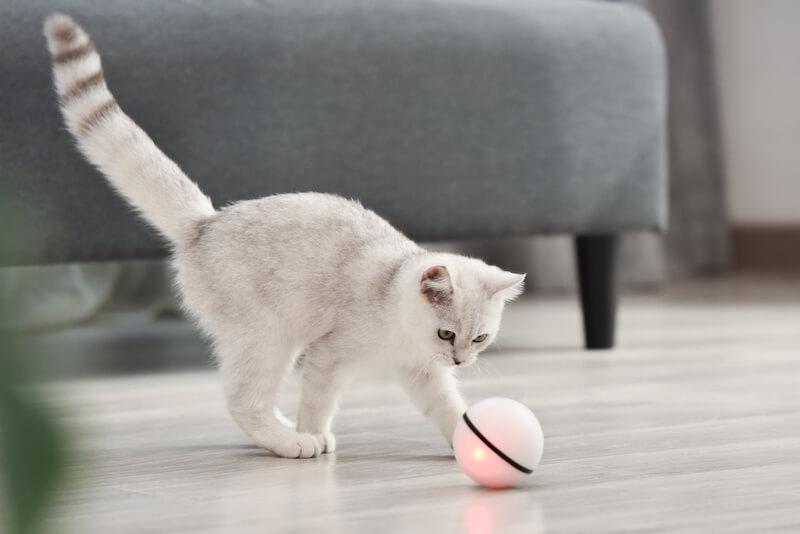 ペット用のボール型おもちゃ「スマートペットボール」の使用イメージ