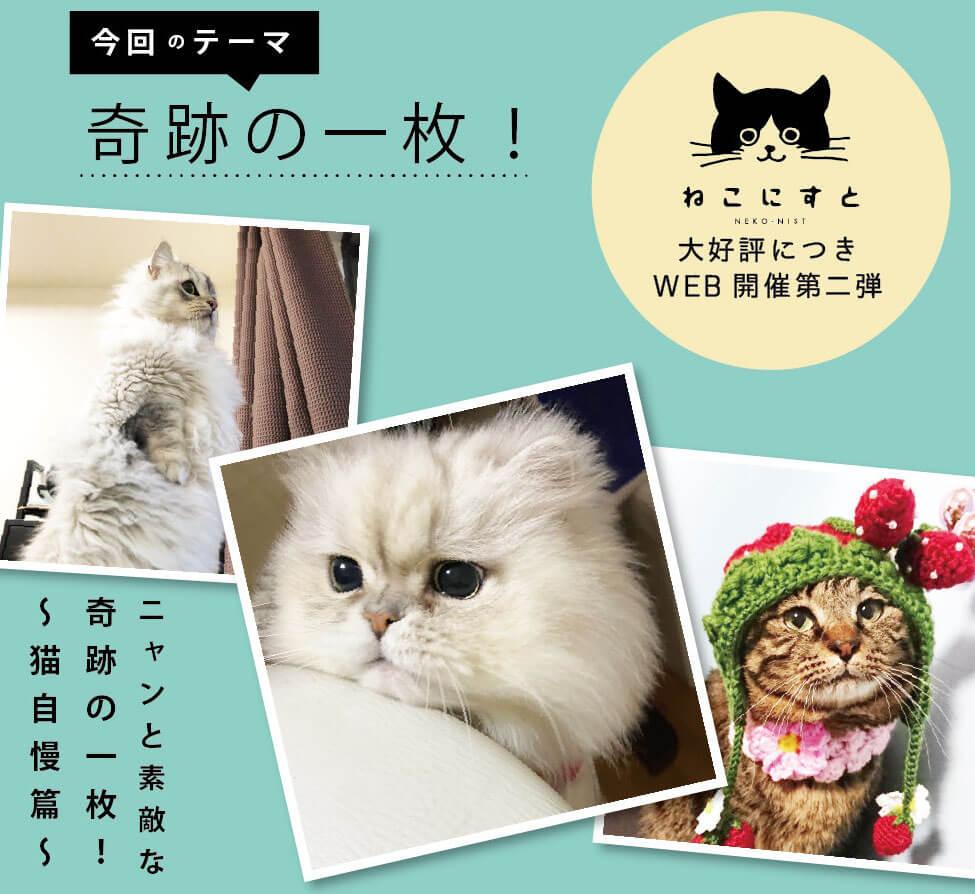 猫の写真展「WEBねこにすと〜ニャンと素敵な奇跡の一枚!〜」の写真募集テーマ
