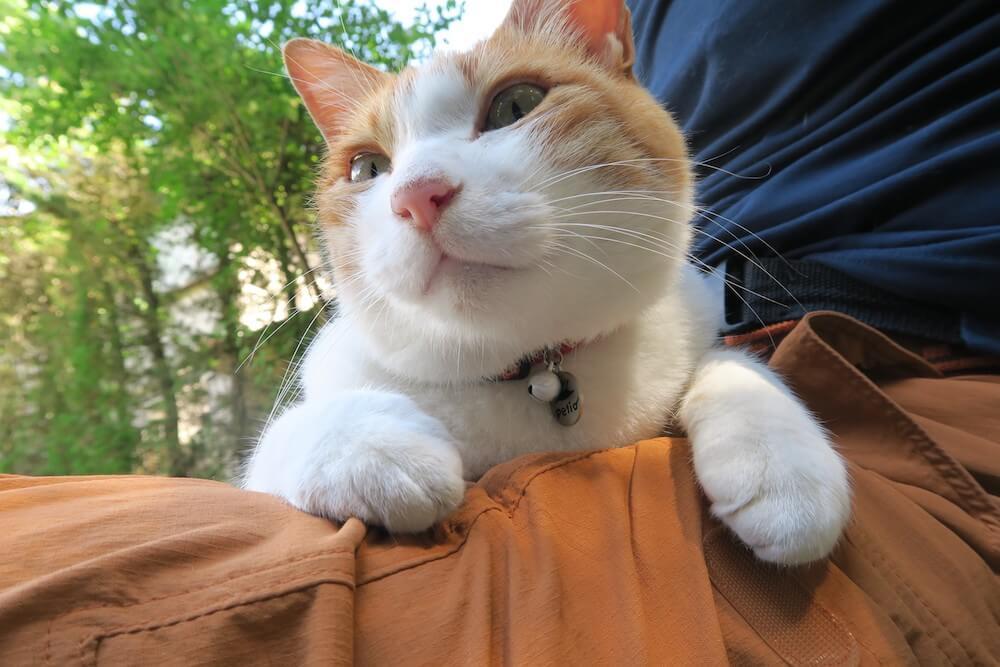 山中湖の湖畔の宿で暮らす茶白の看板猫 by 旅猫ロマン