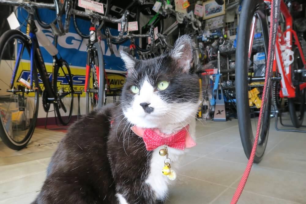 富士吉田にある自転車屋の看板猫 by 旅猫ロマン