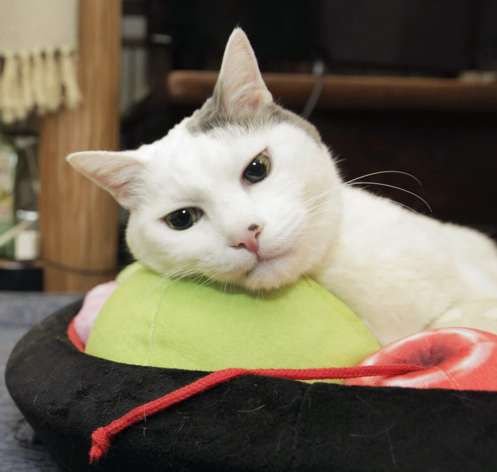 抹茶アイスのクッションにあごを乗せる猫 by あんみつをモチーフにした猫用ベッド