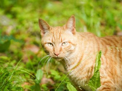 福岡市に続き、奈良市が初めて犬猫の殺処分ゼロを達成!犬猫パートナーシップ店制度も奏功