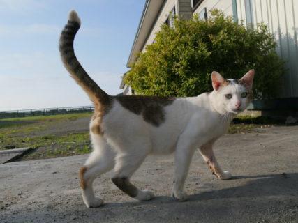 6/6の最新話は日本各地の猫に出会うスペシャル版!ネコを訪ね歩く紀行番組「旅猫ロマン」第60話を放送