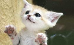 スナネコの赤ちゃんがマジで天使になっていた…!那須どうぶつ王国で6/13から会えるニャ