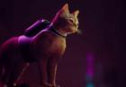 野良ネコが衰退した近未来都市の謎を解き明かす「Stray」注目の猫プロジェクトがゲーム化