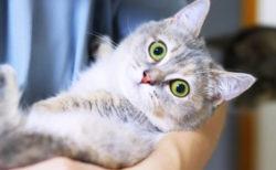 猫に多い病気は下痢や皮膚炎!?保険金の請求データから見る「猫の傷病ランキング2020」