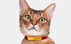 昨日より運動や睡眠が少ないニャ!猫の首輪型デバイスCatlogが行動変化を検知する新機能を追加