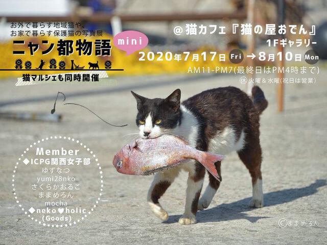 猫イベントも再開の動きが始まる、ねこ写真展「ニャン都物語mini」神戸の猫カフェで開催