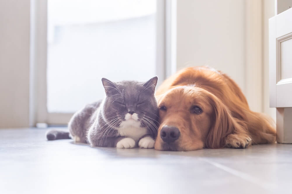 寄り添い合う猫と犬の写真