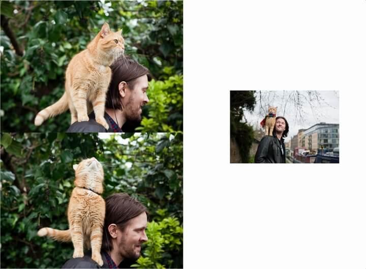 『ボブという名のストリート・キャット』で世界的に有名になった猫・ボブの書籍イメージ