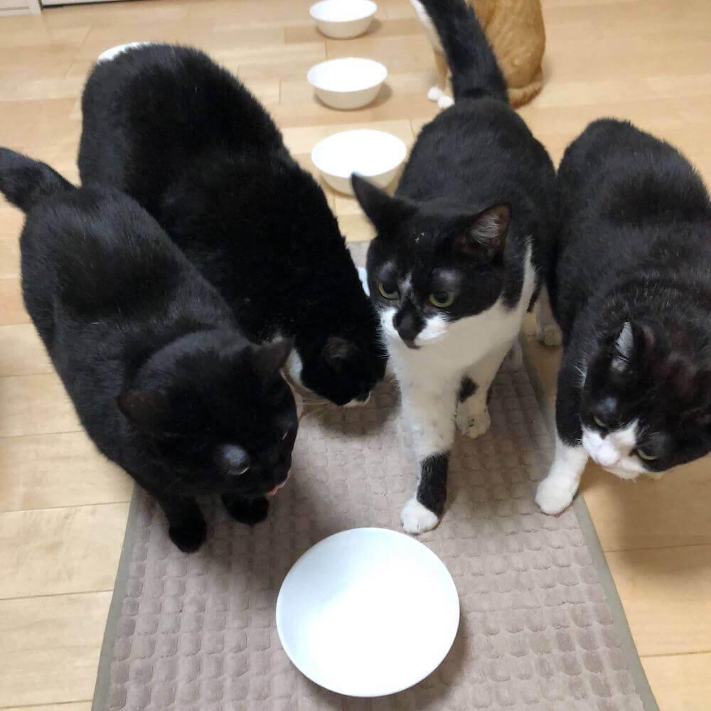 スマート猫トイレ「トレッタ」のZoomを使った獣医師へのオンライン相談イメージ