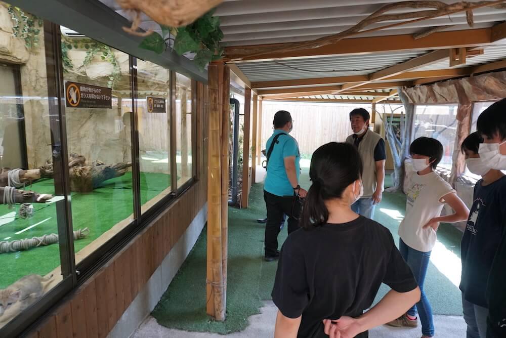 スナネコの赤ちゃんの飼育展示スペース by 那須どうぶつ王国