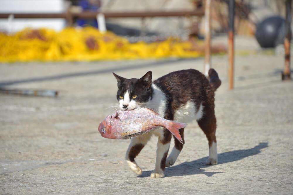 大きな魚を咥えて歩く野良猫の姿 by ニャン都物語 mini