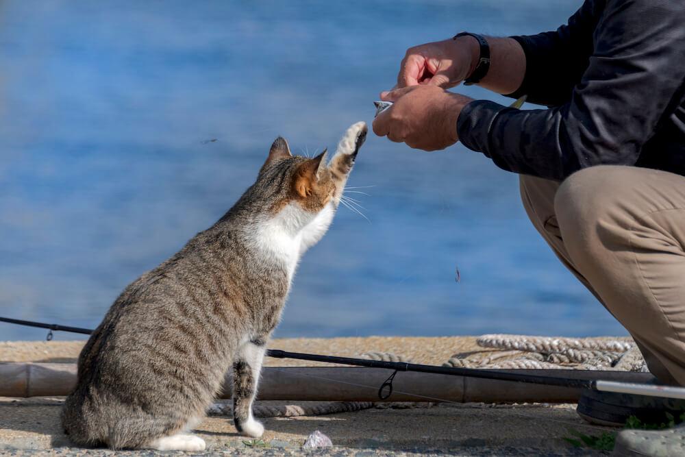 漁師さんの持つ魚に手を伸ばす猫 by ニャン都物語 mini