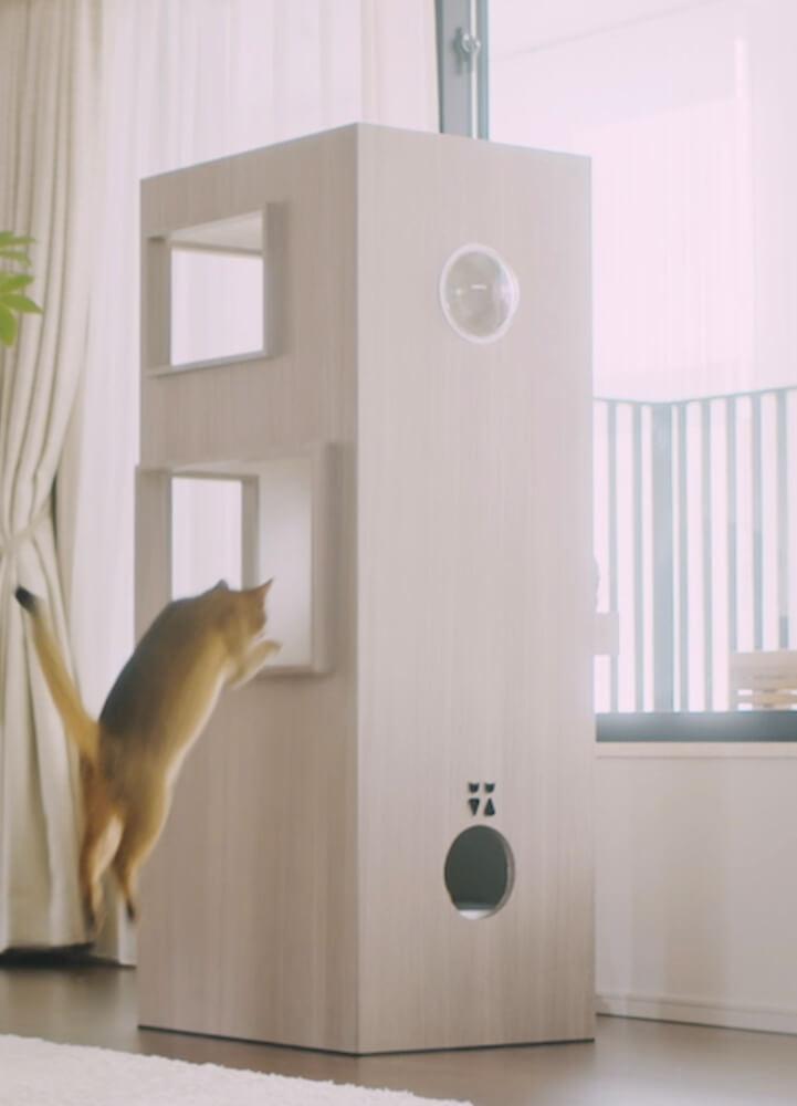 猫タワマンの2階にあるラウンジへとジャンプして飛び乗る猫