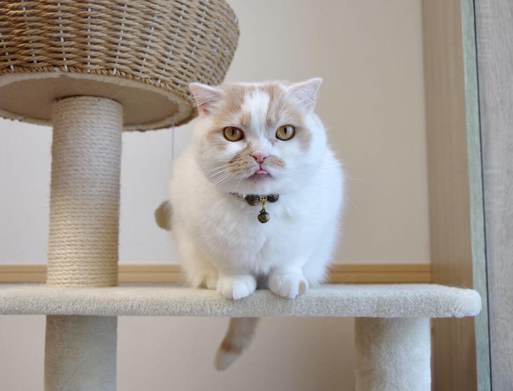 ちくわ柄の猫、ホイップ