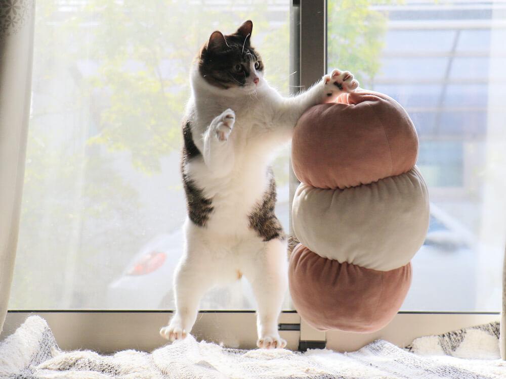 二本足で立つ猫の写真 by 中川ちさ