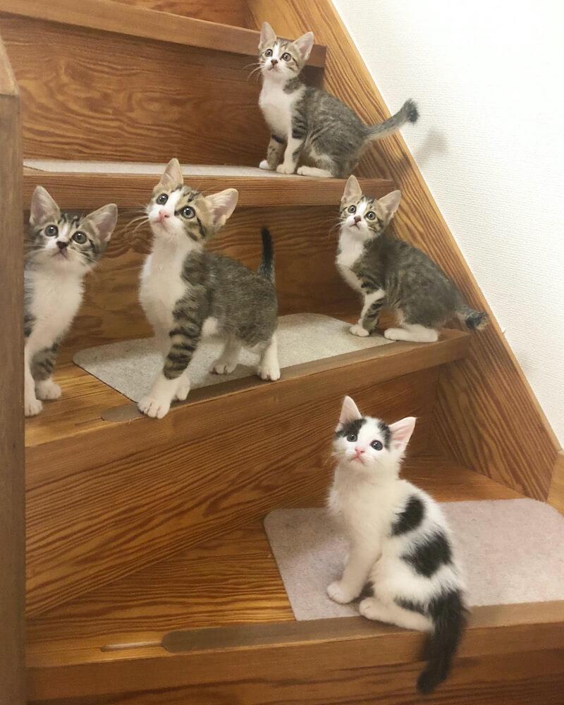 階段に集合する5匹の子猫たち by Mai