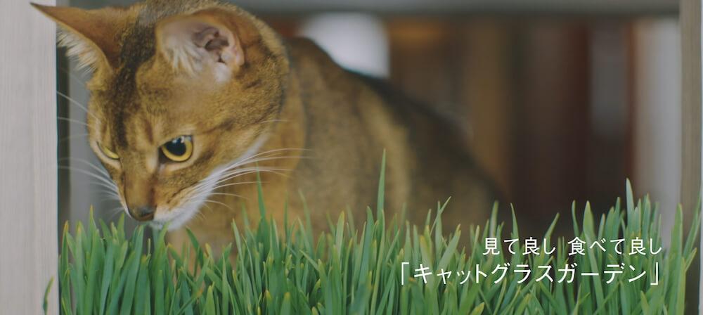 猫タワマンの2階にあるラウンジスペースで猫草を食べる猫