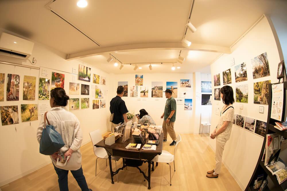 神戸の猫カフェ「猫の屋(ねこのや)おでん」の1Fにあるギャラリースペースで開催される写真展のイメージ