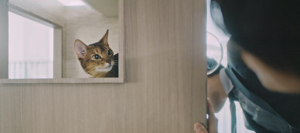猫タワマンの3階のスクエア窓から顔を覗かせる猫