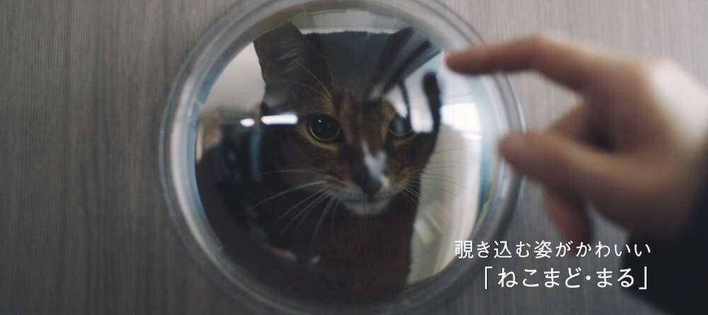 猫タワマンの3階にあるカプセル型の丸窓から外をうかがう猫