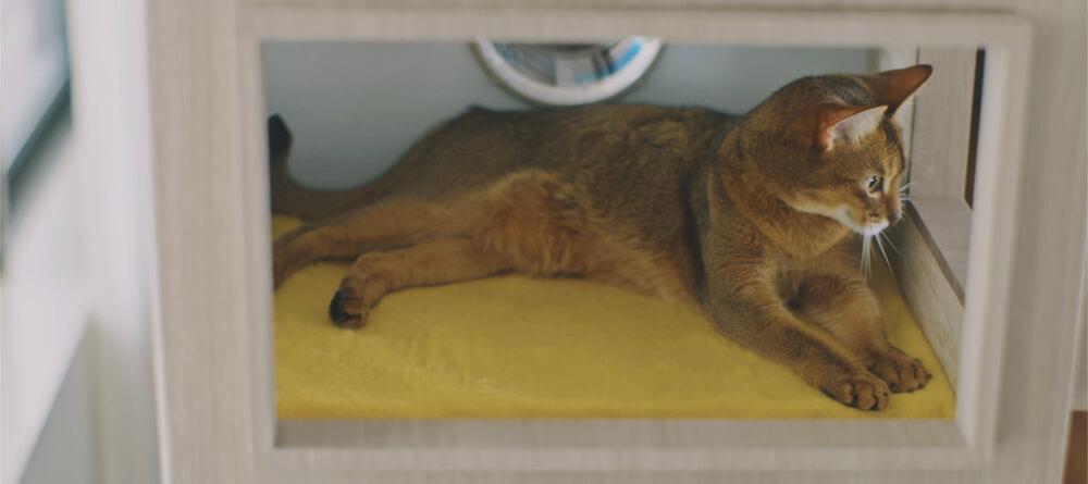 猫タワマンの3階にある住戸スペースでスフィンクス座りで窓の外を眺める猫