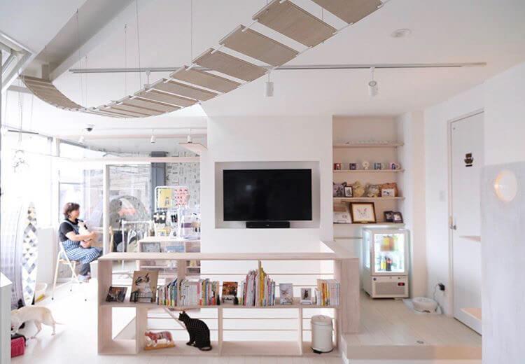 神戸の猫カフェ「猫の屋(ねこのや)おでん」の店内イメージ2