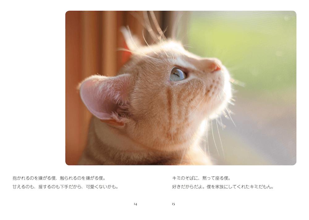 真上を見つめるアメリカンショートヘアのきなちゃん by 写真集「猫は家族」