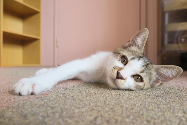 異物が落ちていない猫の飼育部屋イメージ写真