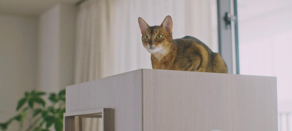 猫タワマンの4階にあるスカイベッドから室内を見渡す猫
