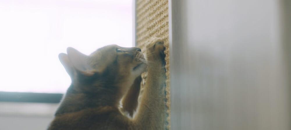 猫タワマンの壁に設置されているスクラッチウォールで爪を研ぐ猫