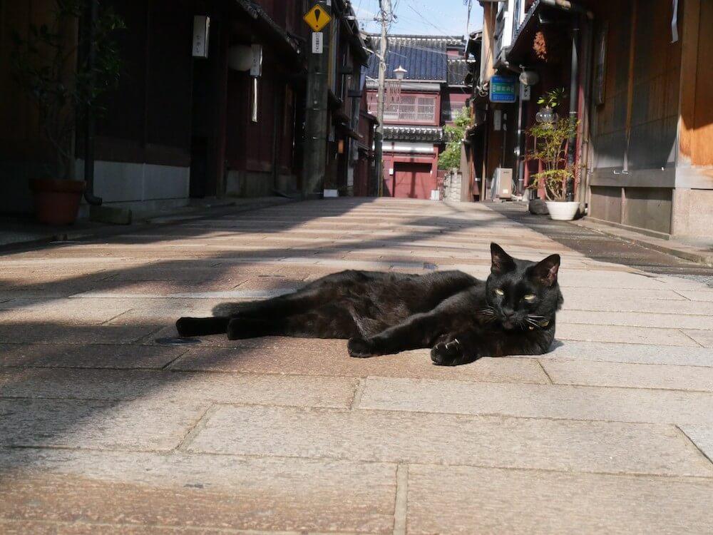 旅猫ロマン 第60話「美しい日本」に登場する黒猫